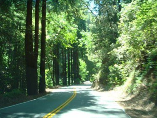 Tall redwoods create a green canopy framing stretches of Skyline Boulevard